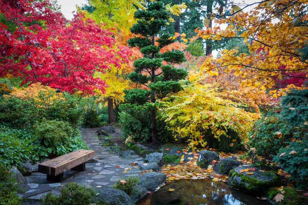 Japanese Garden (Lithia Park) in early November
